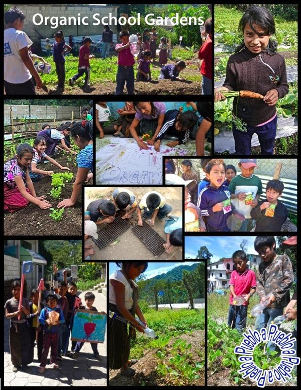 organic school gardens by Pueblo a Pueblo
