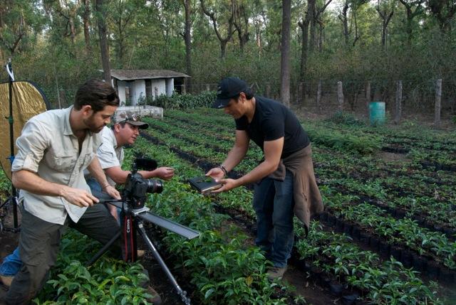 sustainable harvest importers roya disaster program