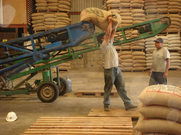 UTZ Certification reports strong growth in 2012