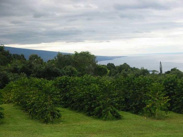 Hawaii coffee farms for sale