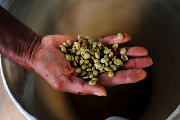 the economic impacts of coffee microlots on farmers