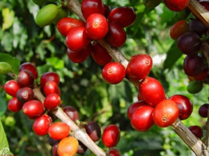 colombian coffee growers and ecomill washing