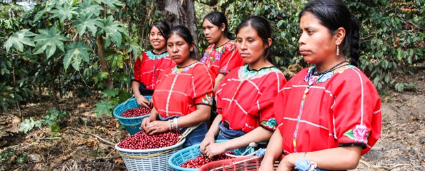 new certification for harvested by women