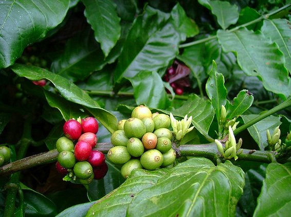 Food Security In Coffee Communities: From 2003 to 2023