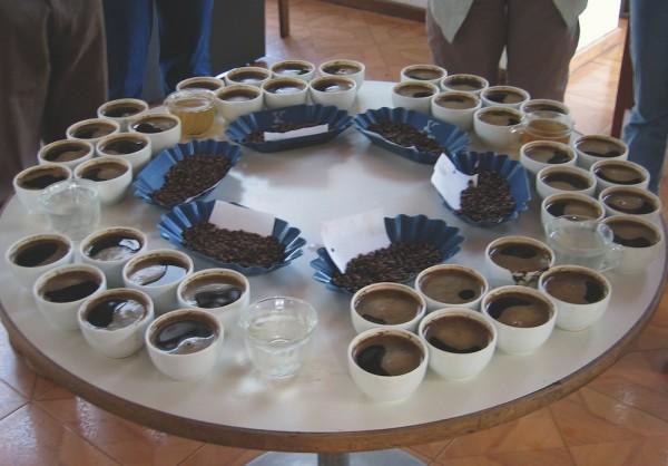 robusta cupping tasting