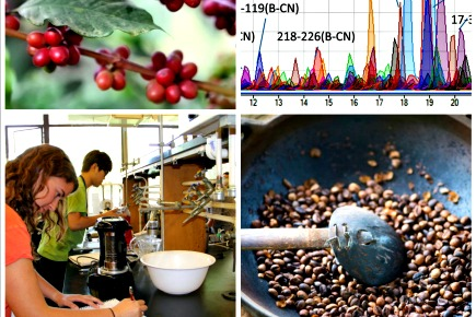 UC Davis Creates Coffee Center, Coffee Science Major Could Follow