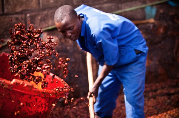 Processing in Rwanda. Photo courtesy of A Film About Coffee.