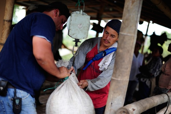 coffee weighed colombia farm