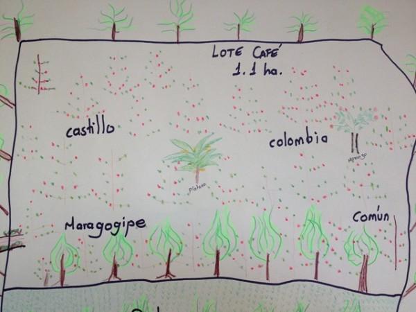 Corona-Zambrano-farm-map