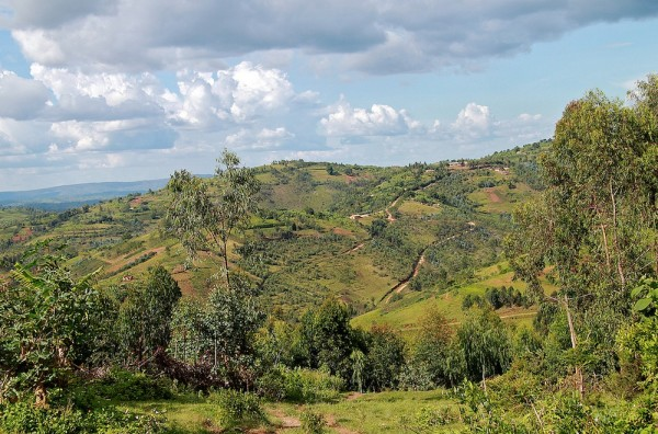 Organized Coffee Growers in Burundi Seeking Micro-Bank for Smallholders