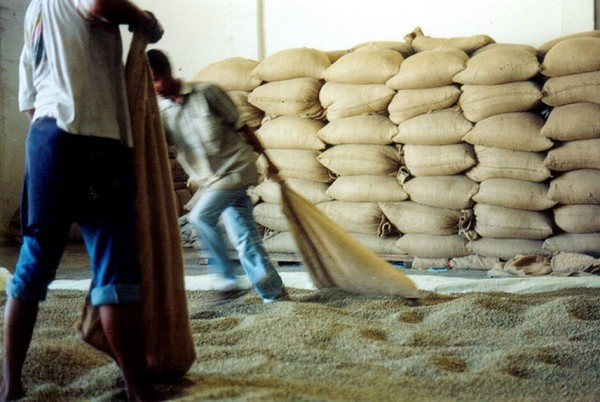 A Brief History of Global Coffee Production As We Know It (1963-2013)