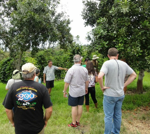 A quick stop at Kona Earth Coffee farm featured the shade of some  macadamia nut trees, a common companion to coffee trees on Kona farms.