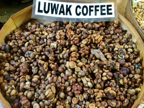 Certifiers Shutting Out Producers Using Caged Civets for Kopi Luwak