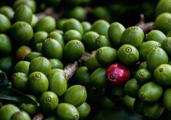 Coffee Prices Hit 2.5-Year High, While Brazilian Expert Skeptical About 2015/16 Crop