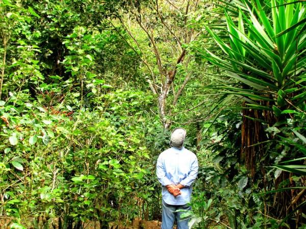 Directo Caffe founder Alvaro Castro on the family farm.