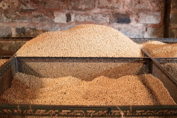 Nyeri coffee parchment
