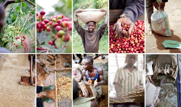 From Problem to Opportunity in Coffee-Reliant Burundi (Video)