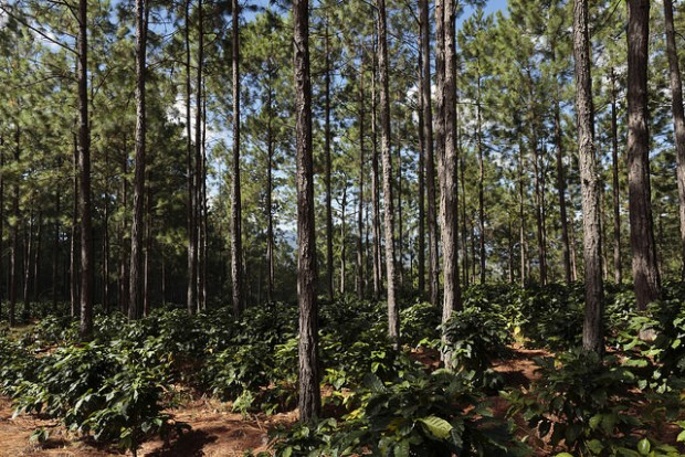 What Does Private Investment Into Coffee Farms Actually Look Like?
