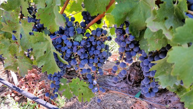 What Coffee Can Learn From Farm Management at Napa's Vineyards