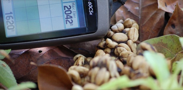 Responsible, Sustainable Kopi Luwak Production: Could It Be a Real Thing?