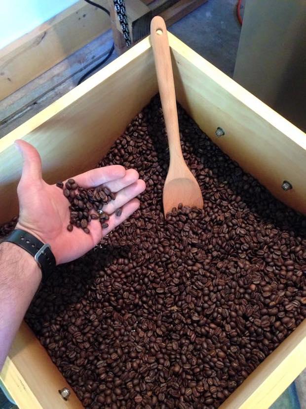wild_bean_coffee
