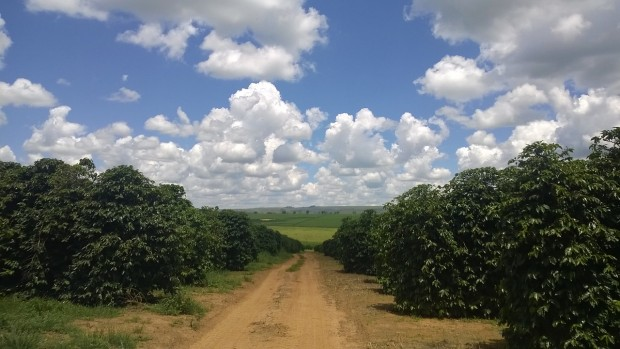 coffee farm minas