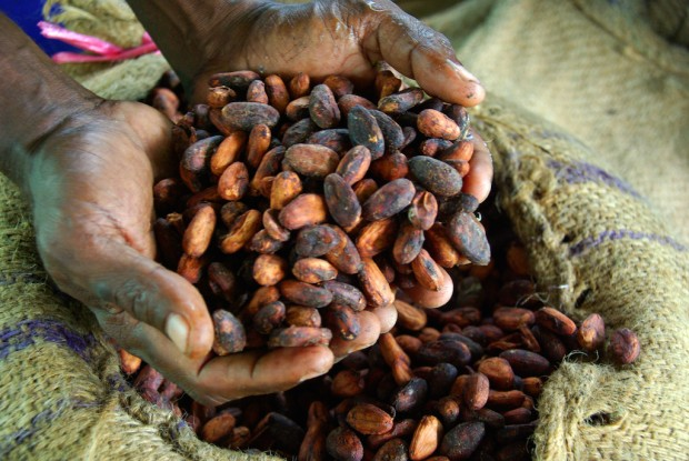 Dried cocoa beans. All photos
