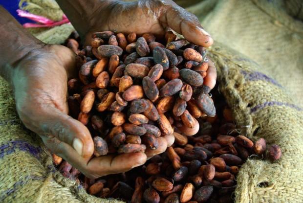 Dried cocoa beans. All photos