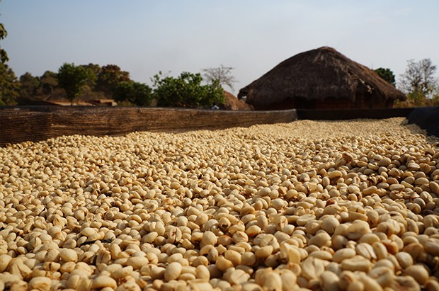 First Ever Washed Coffee From South Sudan Reaches Consumer Market