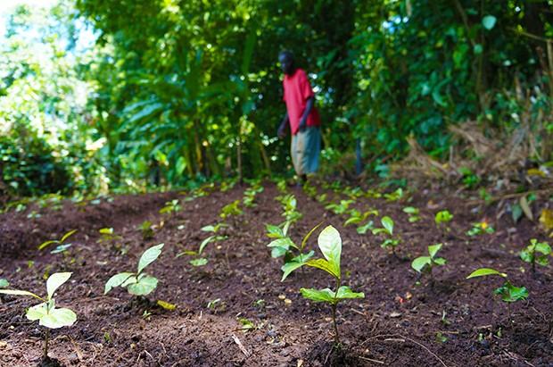 blog_a-growing-coffee-partnership2