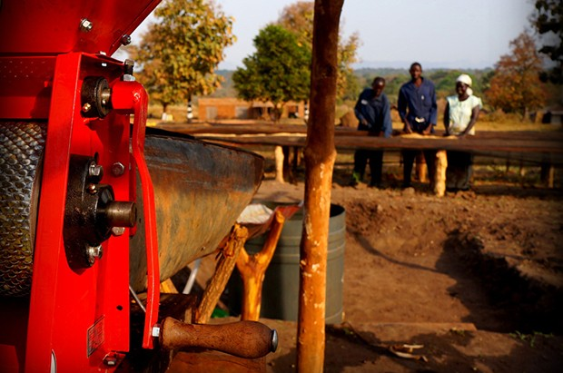 blog_setting-benchmarks-in-south-sudans-coffee-industry(1)