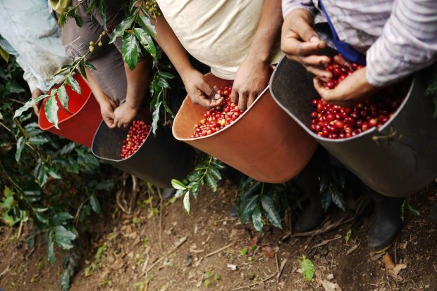 CRS Unveils Three-Year, $4.5 Million 'Coffeelands' Project