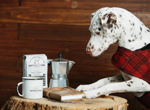 Grounds & Hounds Fills Cups to Save Neglected Pups