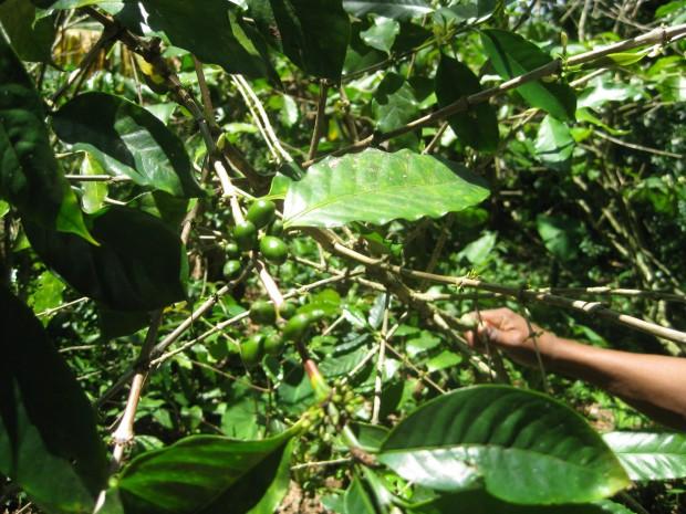 Coffee in La Croix.