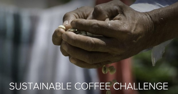 Conservation International Leading Broad Global Framework for Coffee Sustainability