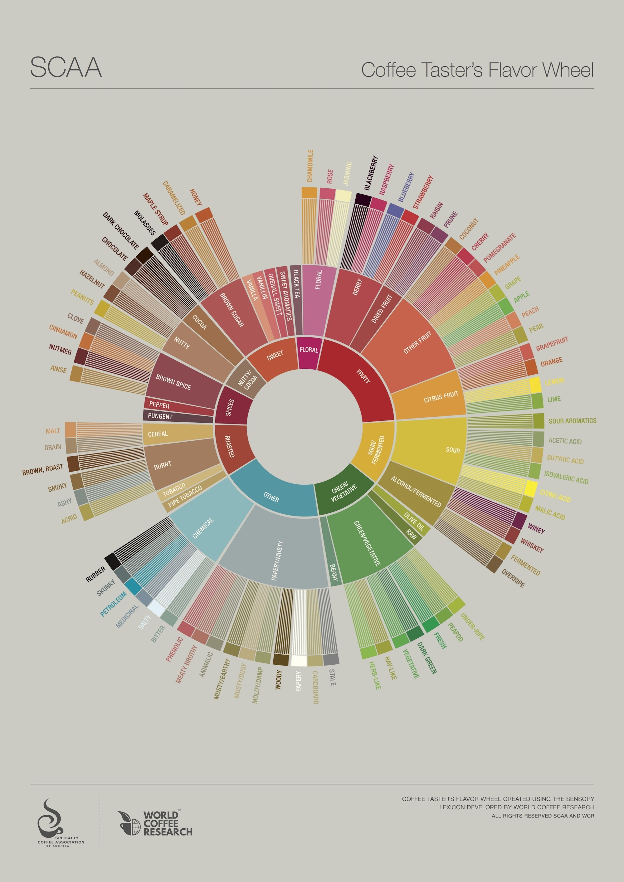new coffee flavor wheel scaa
