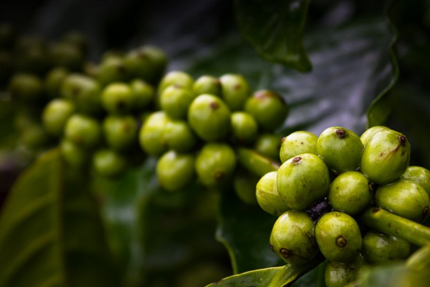"Creative Commons ""Coffee Plantations"" photo by Premnath Thirumalaisamy."