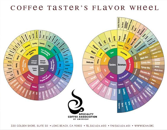 The previous SCAA flavor wheel, developed by Ted Lingle 21 years ago.