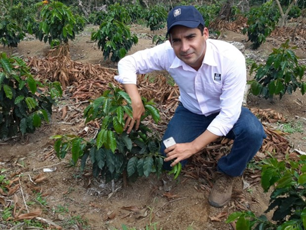 San Francisco Bay Gourmet Hopes to Plant 50 Million Trees to Fight Rust