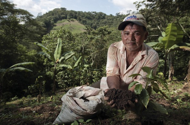 We Must Dig Deeper to Improve Coffee's Soil Health