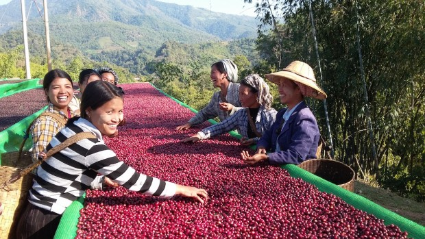 After Record-Breaking Competition, Myanmar Coffees Coming to Atlanta
