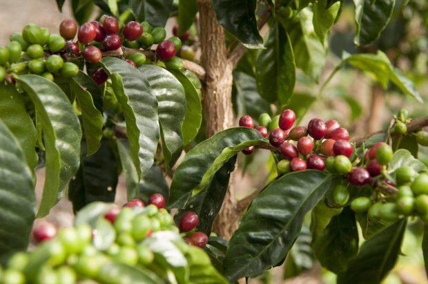 Photo by Hacienda La Papaya
