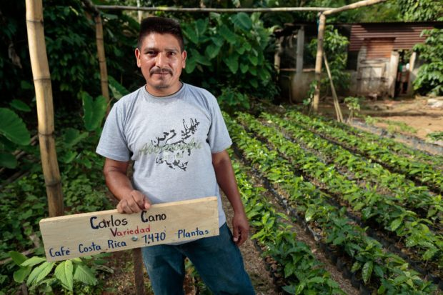 In Guatemala, Incentivizing Farmer-Led Renovation While Investing in 'Social Capital'