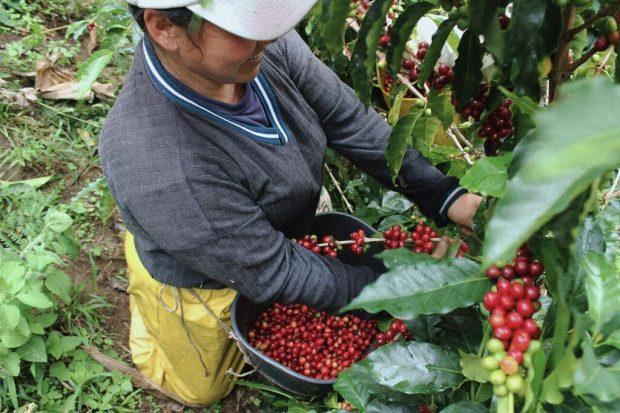 fika coffee company california