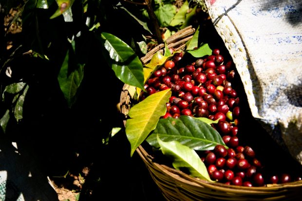 The International Coffee Organization Seeking Input On Its Future
