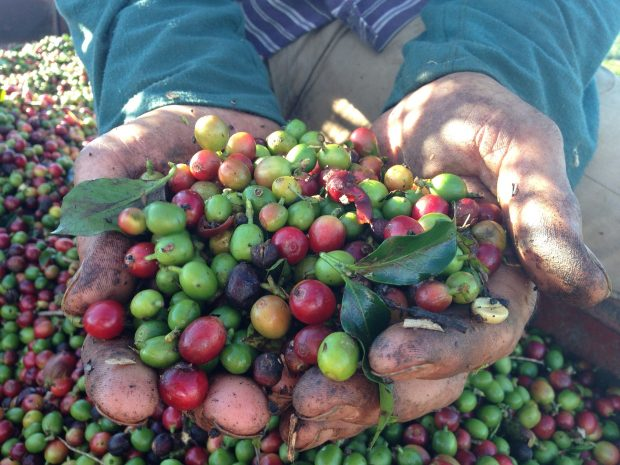 Farmworker Inclusion: A New Sustainability Frontier in Specialty Coffee
