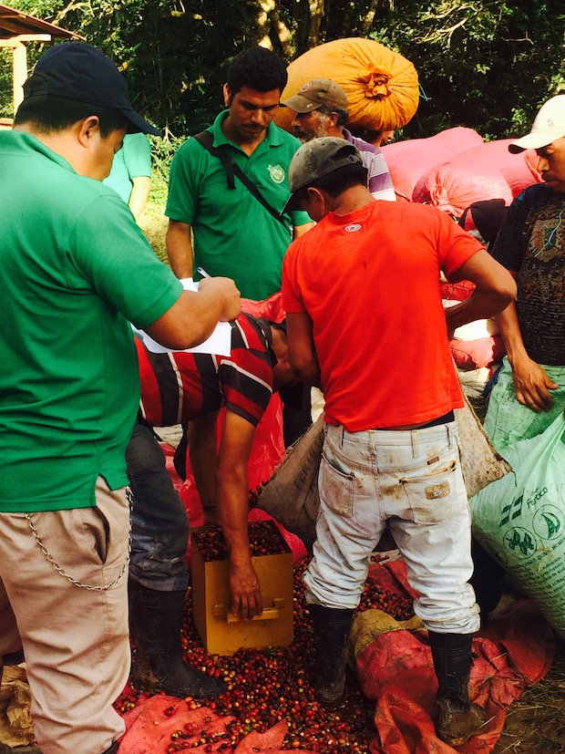 Farmworkers weighing their daily harvest in Matagalpa, Nicaragua. Photo by Ben Corey-Moran.