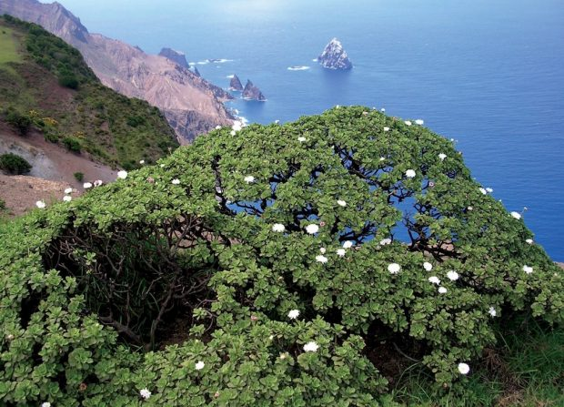 A view of St. Helena courtesy of sthelenaisland.info