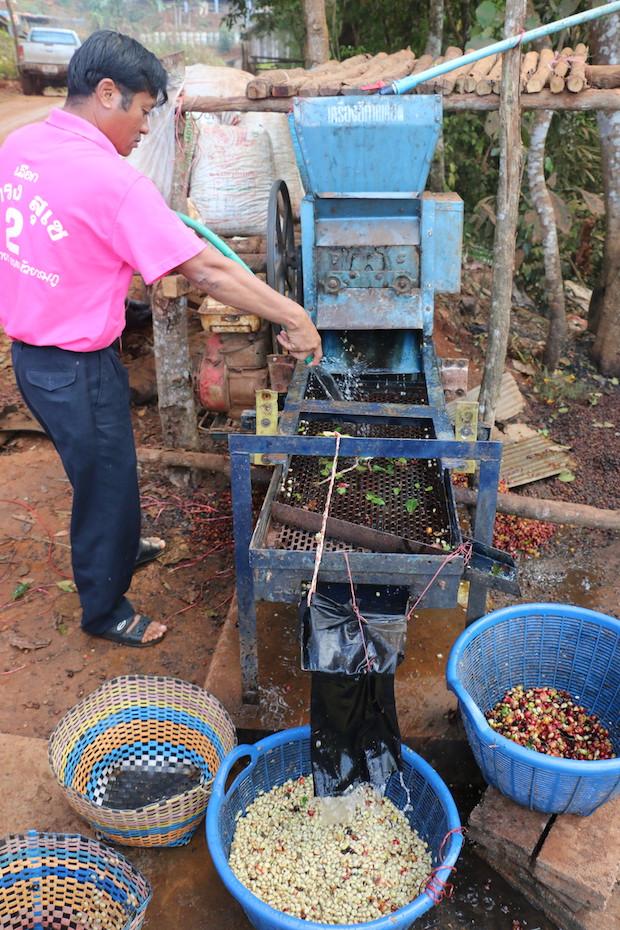 Thai coffee farmers.