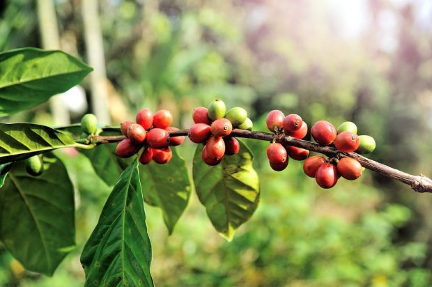 From the ICO, Here's How Coffee Farming Is Often Not Viable